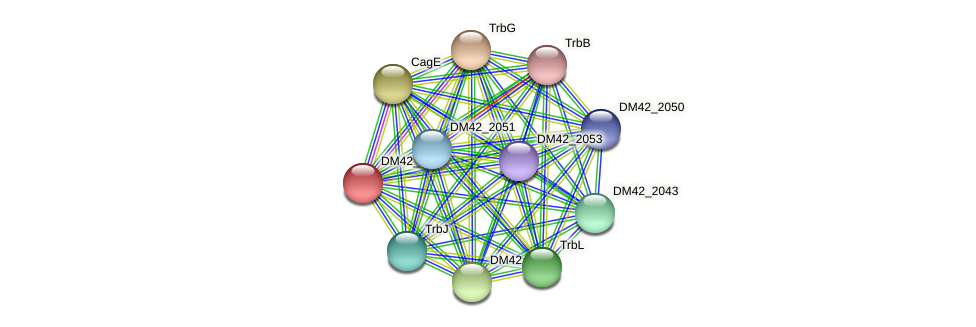 DM42_2044 protein (Burkholderia cepacia) - STRING interaction network