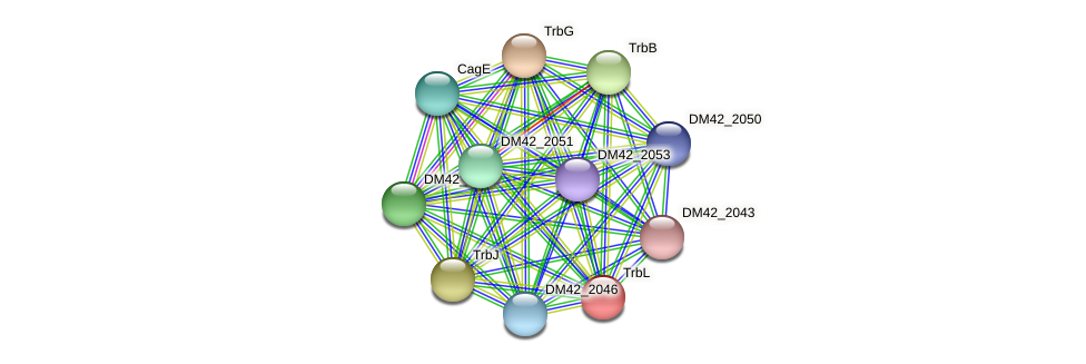 DM42_2047 protein (Burkholderia cepacia) - STRING interaction network
