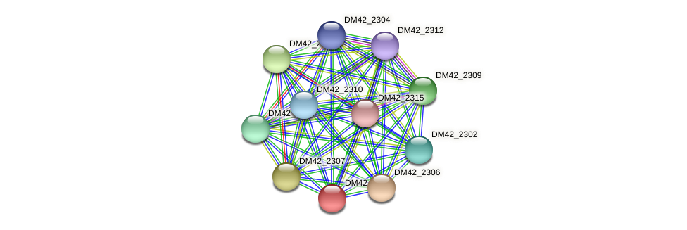 DM42_2305 protein (Burkholderia cepacia) - STRING interaction network