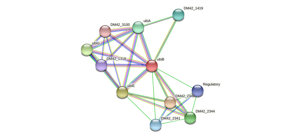 ubiB protein (Burkholderia cepacia) - STRING interaction network