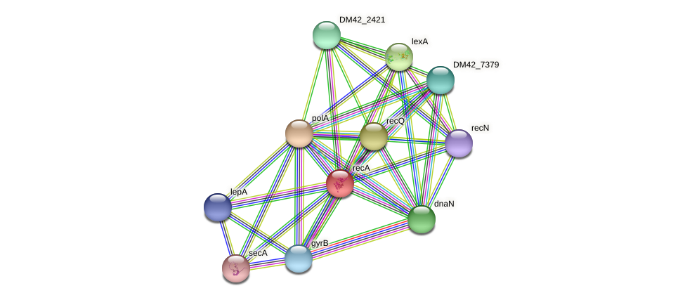 recA protein (Burkholderia cepacia) - STRING interaction network