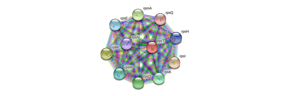 rpsT protein (Burkholderia cepacia) - STRING interaction network
