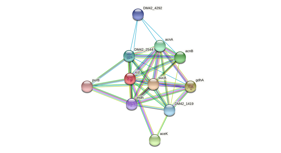 icd protein (Burkholderia cepacia) - STRING interaction network