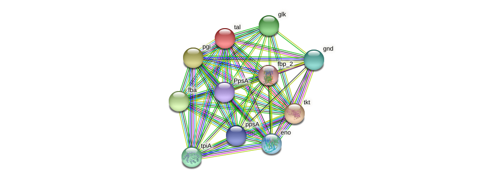tal protein (Burkholderia cepacia) - STRING interaction network
