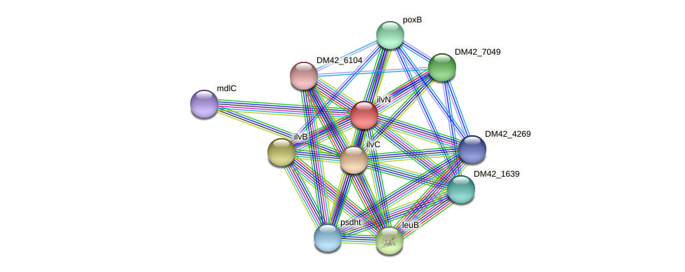 ilvN protein (Burkholderia cepacia) - STRING interaction network