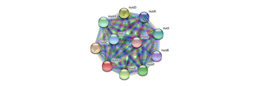nuoG protein (Burkholderia cepacia) - STRING interaction network