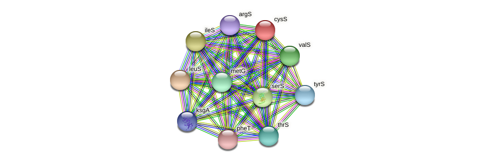 cysS protein (Burkholderia cepacia) - STRING interaction network