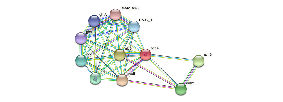 aceA protein (Burkholderia cepacia) - STRING interaction network