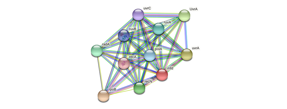 mfd protein (Burkholderia cepacia) - STRING interaction network