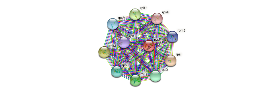 rpsF protein (Burkholderia cepacia) - STRING interaction network