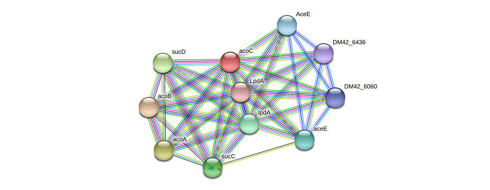 acoC protein (Burkholderia cepacia) - STRING interaction network