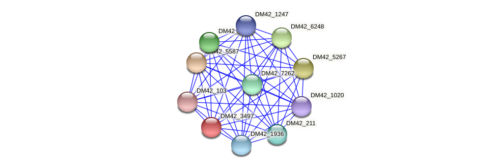 DM42_3497 protein (Burkholderia cepacia) - STRING interaction network