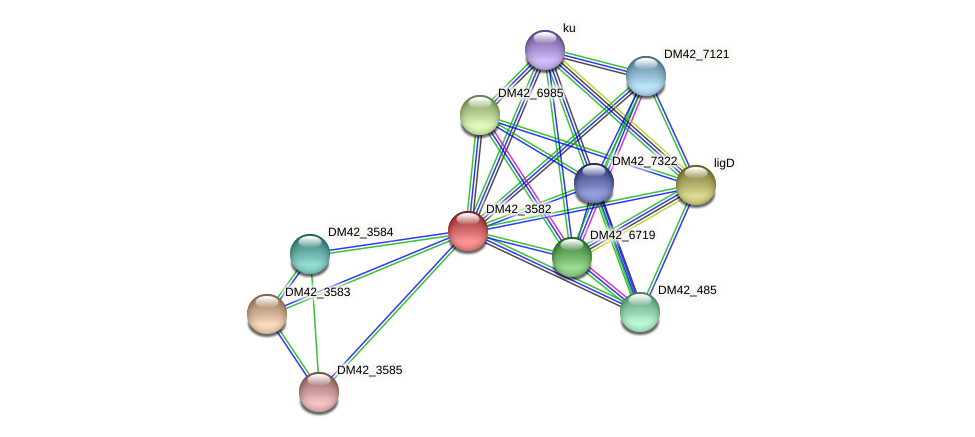 DM42_3582 protein (Burkholderia cepacia) - STRING interaction network