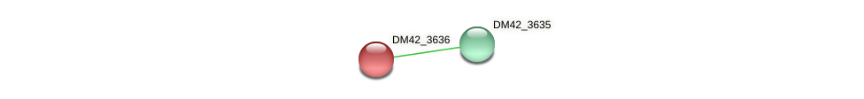 DM42_3636 protein (Burkholderia cepacia) - STRING interaction network