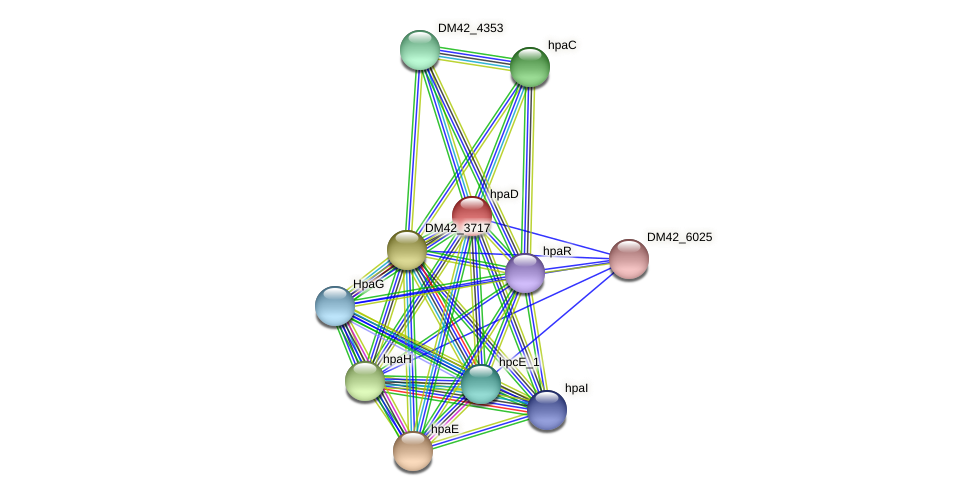 hpaD protein (Burkholderia cepacia) - STRING interaction network
