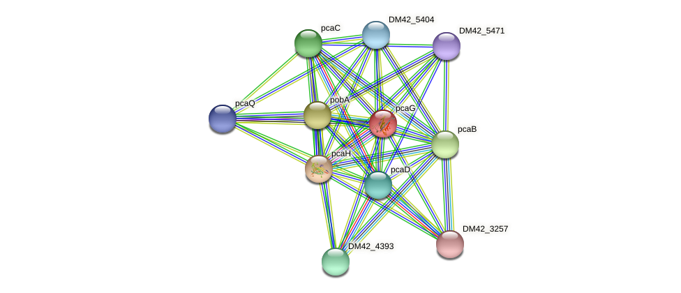 pcaG protein (Burkholderia cepacia) - STRING interaction network