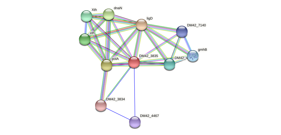 DM42_3835 protein (Burkholderia cepacia) - STRING interaction network