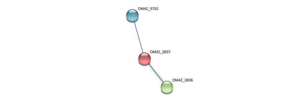DM42_3837 protein (Burkholderia cepacia) - STRING interaction network