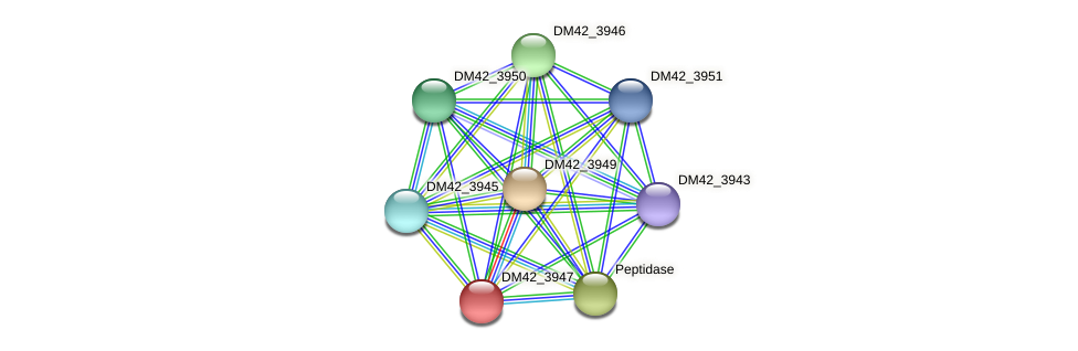 DM42_3947 protein (Burkholderia cepacia) - STRING interaction network