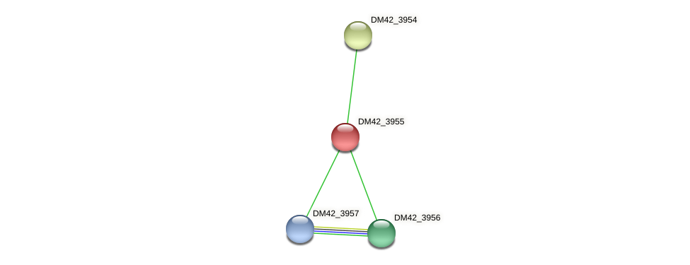 DM42_3955 protein (Burkholderia cepacia) - STRING interaction network