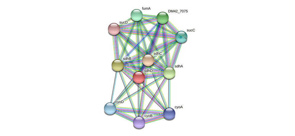 sdhD protein (Burkholderia cepacia) - STRING interaction network