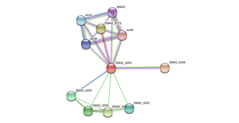 DM42_4203 protein (Burkholderia cepacia) - STRING interaction network