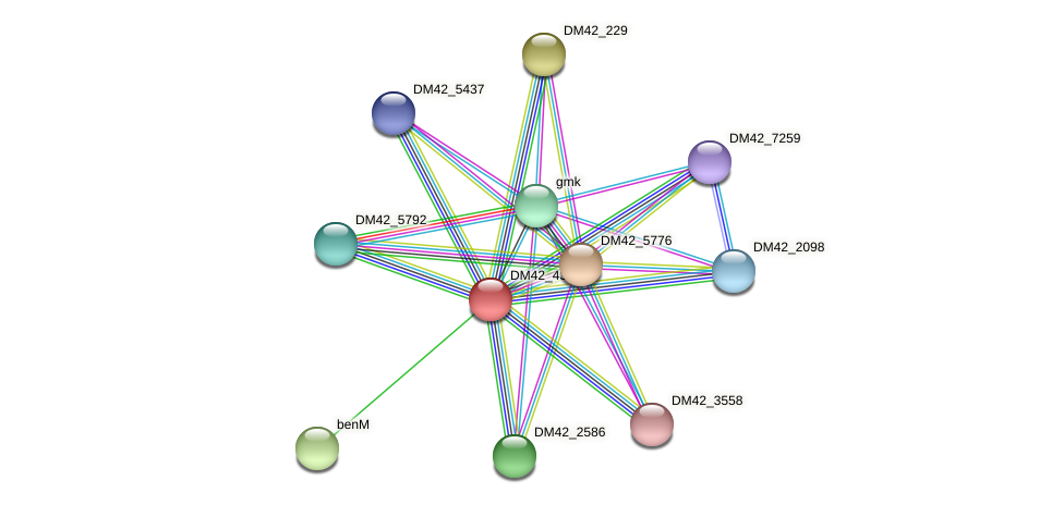 DM42_4335 protein (Burkholderia cepacia) - STRING interaction network