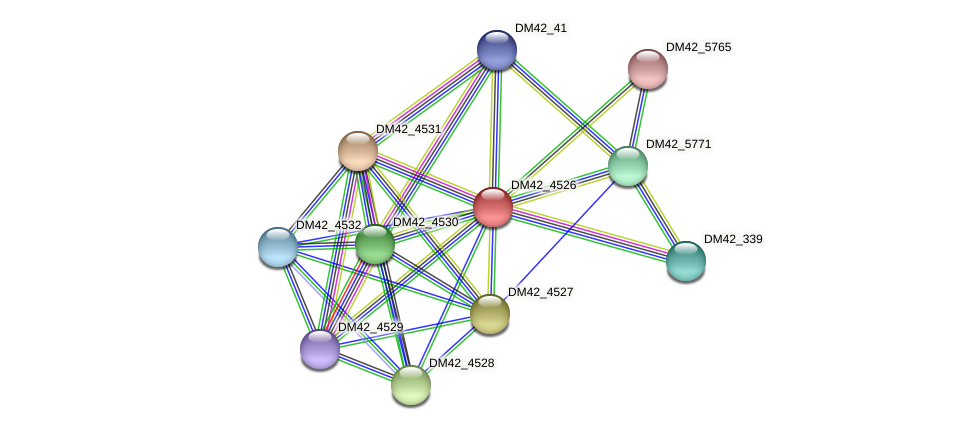 DM42_4526 protein (Burkholderia cepacia) - STRING interaction network