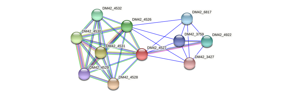 DM42_4527 protein (Burkholderia cepacia) - STRING interaction network