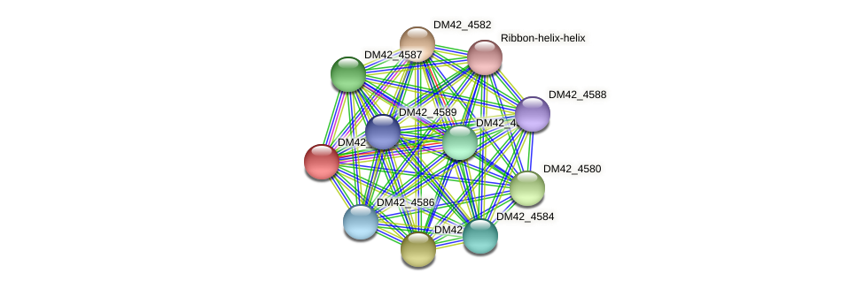 DM42_4581 protein (Burkholderia cepacia) - STRING interaction network