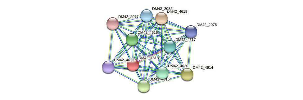 DM42_4618 protein (Burkholderia cepacia) - STRING interaction network
