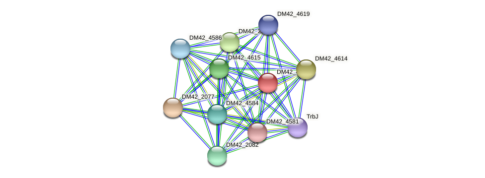 DM42_4623 protein (Burkholderia cepacia) - STRING interaction network
