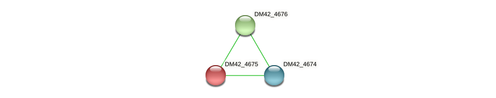 DM42_4675 protein (Burkholderia cepacia) - STRING interaction network