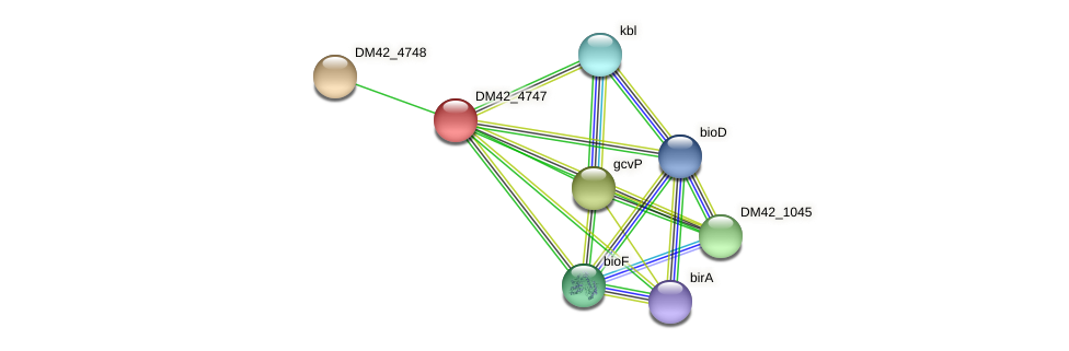 DM42_4747 protein (Burkholderia cepacia) - STRING interaction network
