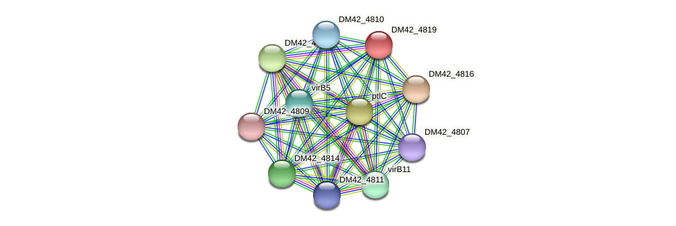 DM42_4819 protein (Burkholderia cepacia) - STRING interaction network
