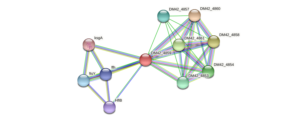 DM42_4859 protein (Burkholderia cepacia) - STRING interaction network