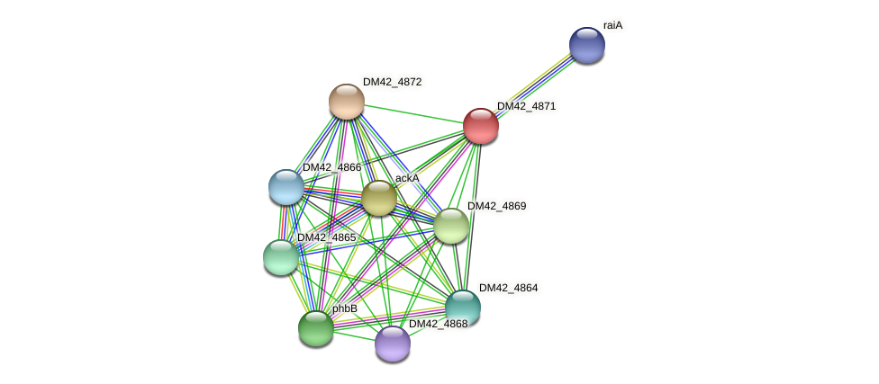 DM42_4871 protein (Burkholderia cepacia) - STRING interaction network