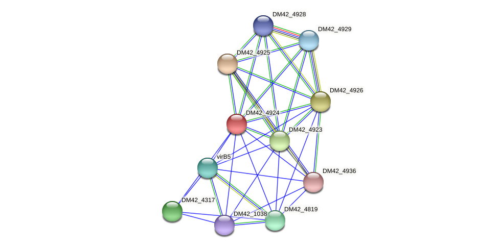 DM42_4924 protein (Burkholderia cepacia) - STRING interaction network