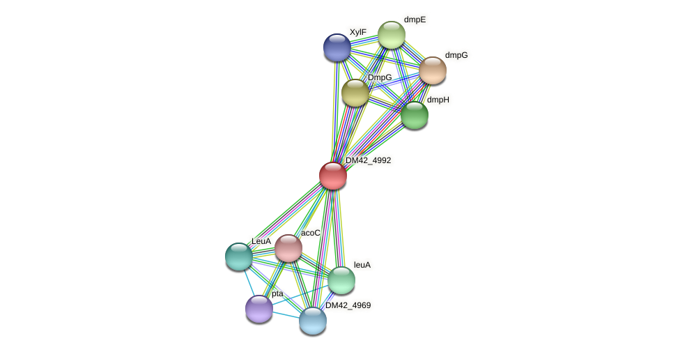 DM42_4992 protein (Burkholderia cepacia) - STRING interaction network