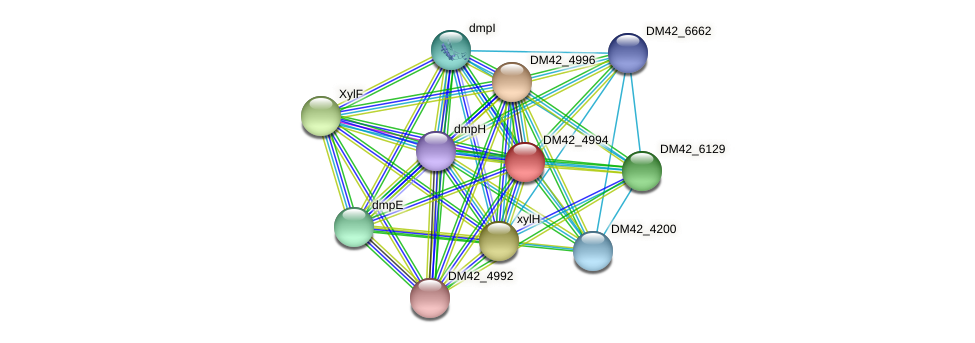 DM42_4994 protein (Burkholderia cepacia) - STRING interaction network