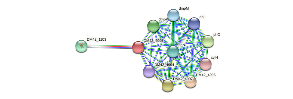 DM42_4995 protein (Burkholderia cepacia) - STRING interaction network