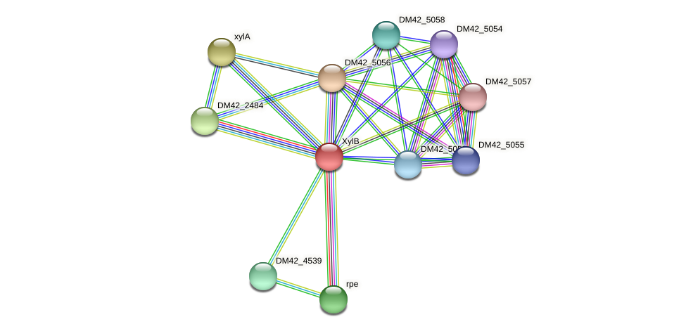 DM42_5059 protein (Burkholderia cepacia) - STRING interaction network