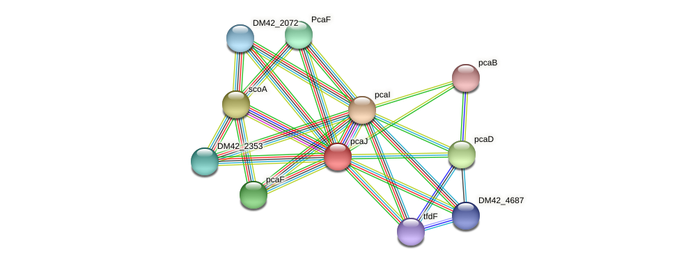 pcaJ protein (Burkholderia cepacia) - STRING interaction network