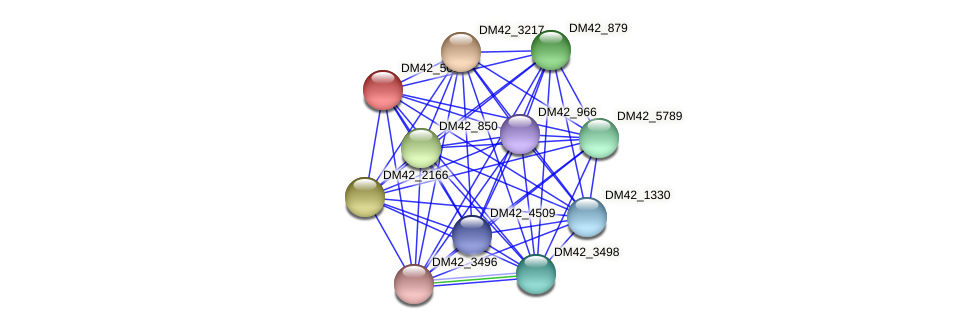 DM42_5096 protein (Burkholderia cepacia) - STRING interaction network