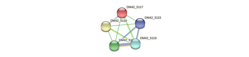DM42_5117 protein (Burkholderia cepacia) - STRING interaction network