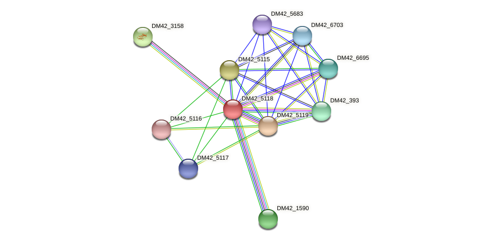 DM42_5118 protein (Burkholderia cepacia) - STRING interaction network