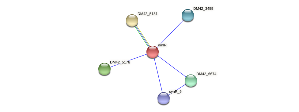 dmlR protein (Burkholderia cepacia) - STRING interaction network