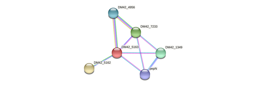 DM42_5163 protein (Burkholderia cepacia) - STRING interaction network