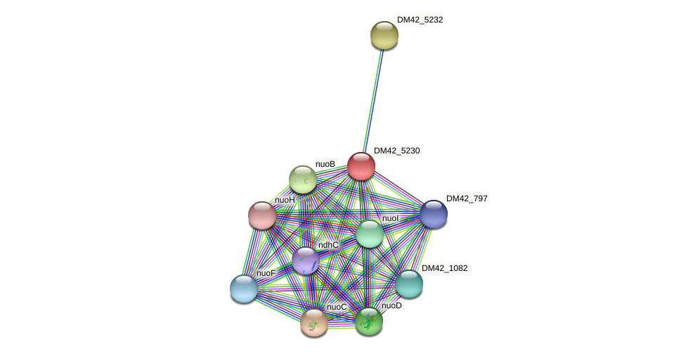 DM42_5230 protein (Burkholderia cepacia) - STRING interaction network