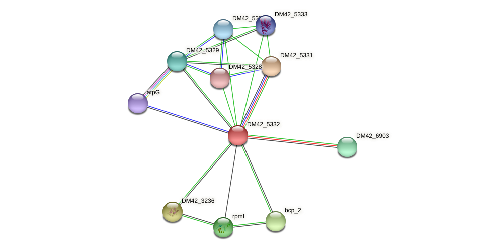 DM42_5332 protein (Burkholderia cepacia) - STRING interaction network